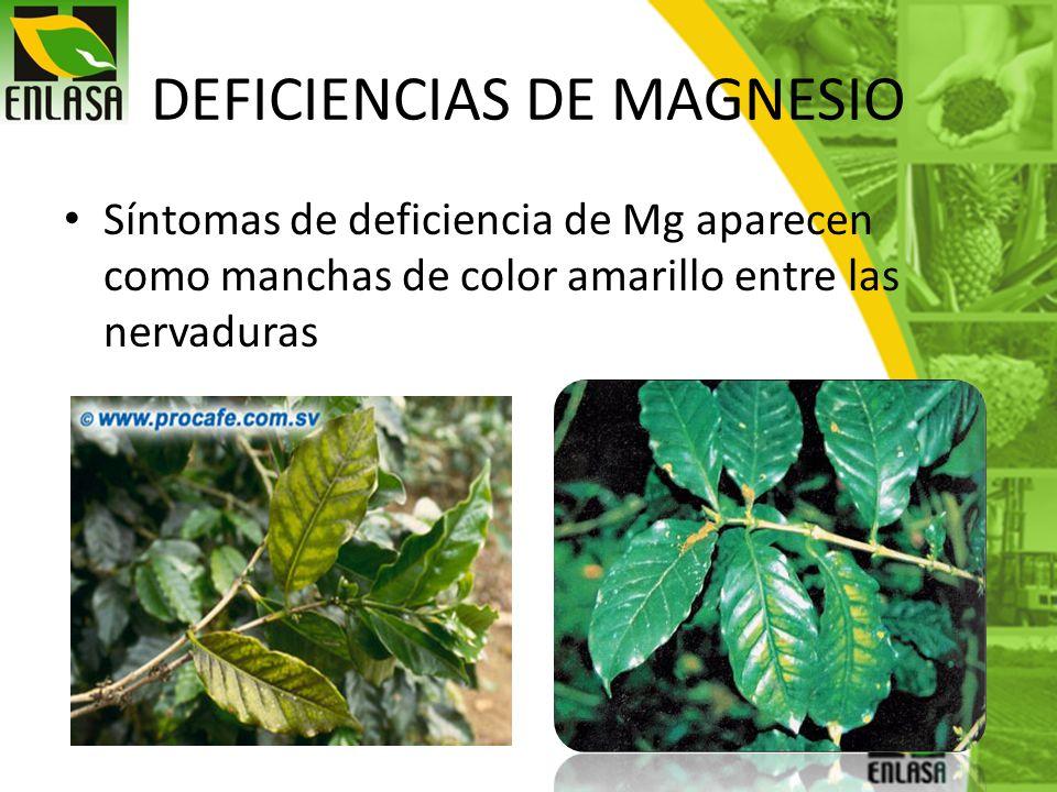 DEFICIENCIAS DE MAGNESIO