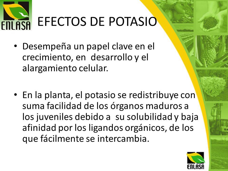 EFECTOS DE POTASIO Desempeña un papel clave en el crecimiento, en desarrollo y el alargamiento celular.