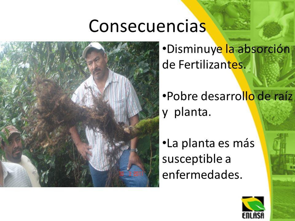 Consecuencias Disminuye la absorción de Fertilizantes.