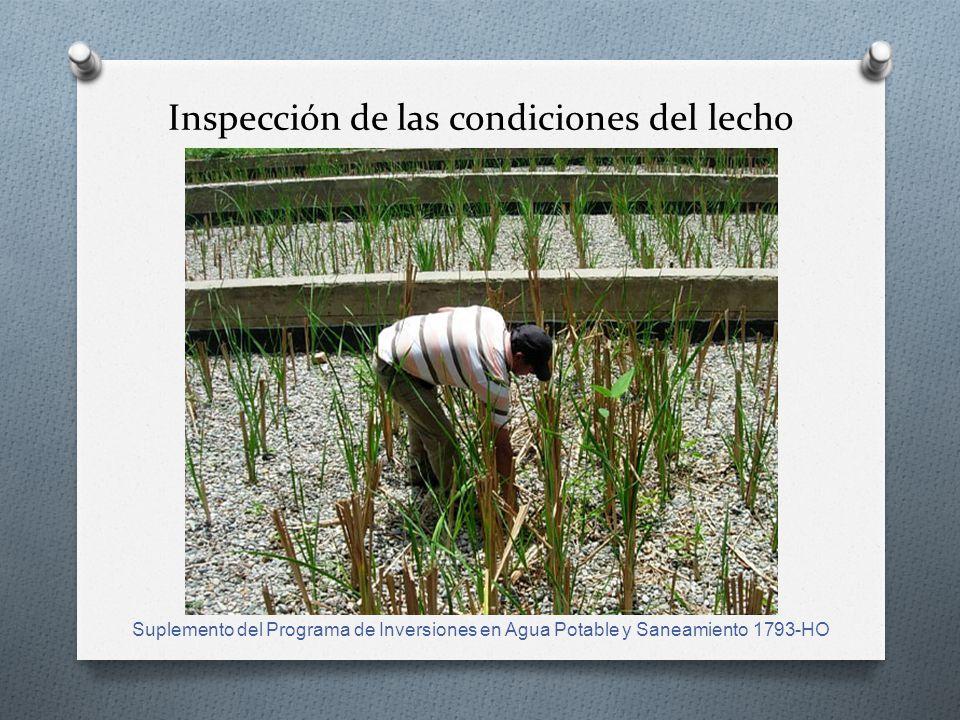Inspección de las condiciones del lecho