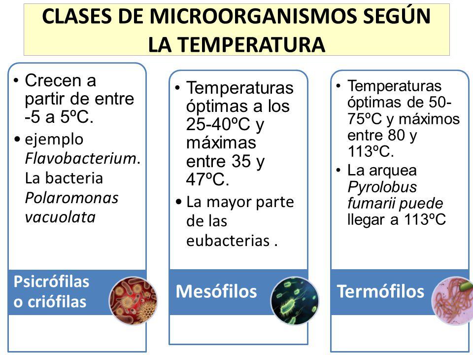 CLASES DE MICROORGANISMOS SEGÚN LA TEMPERATURA