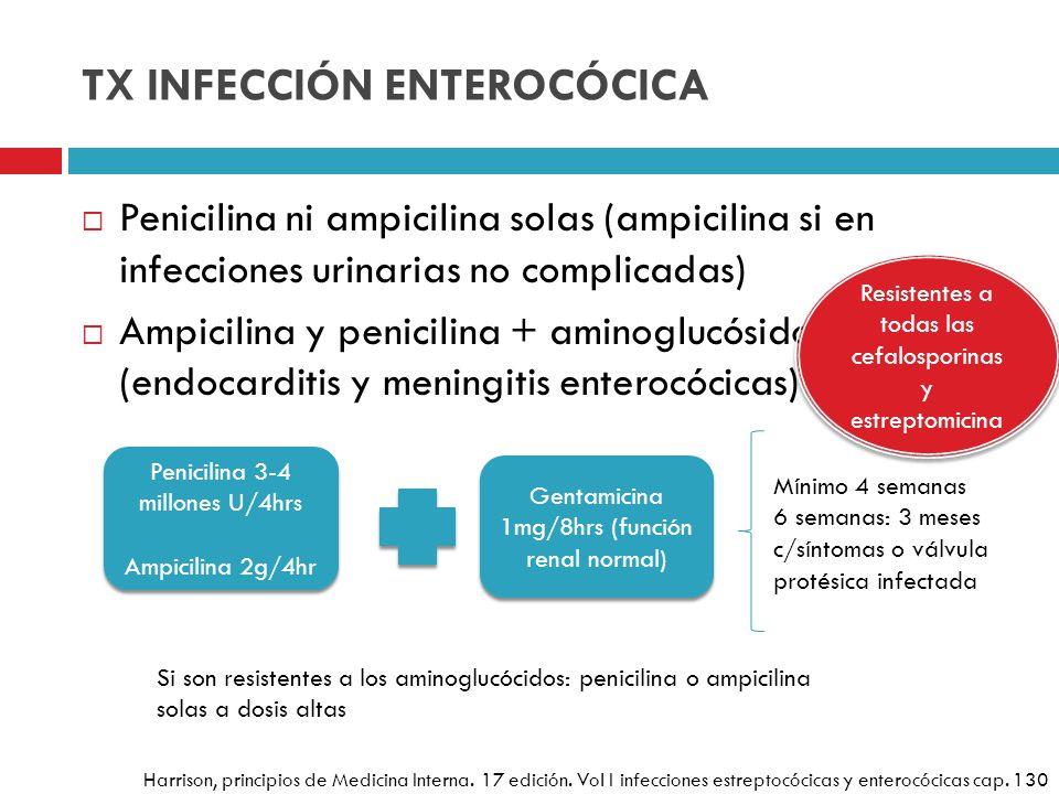 TX INFECCIÓN ENTEROCÓCICA