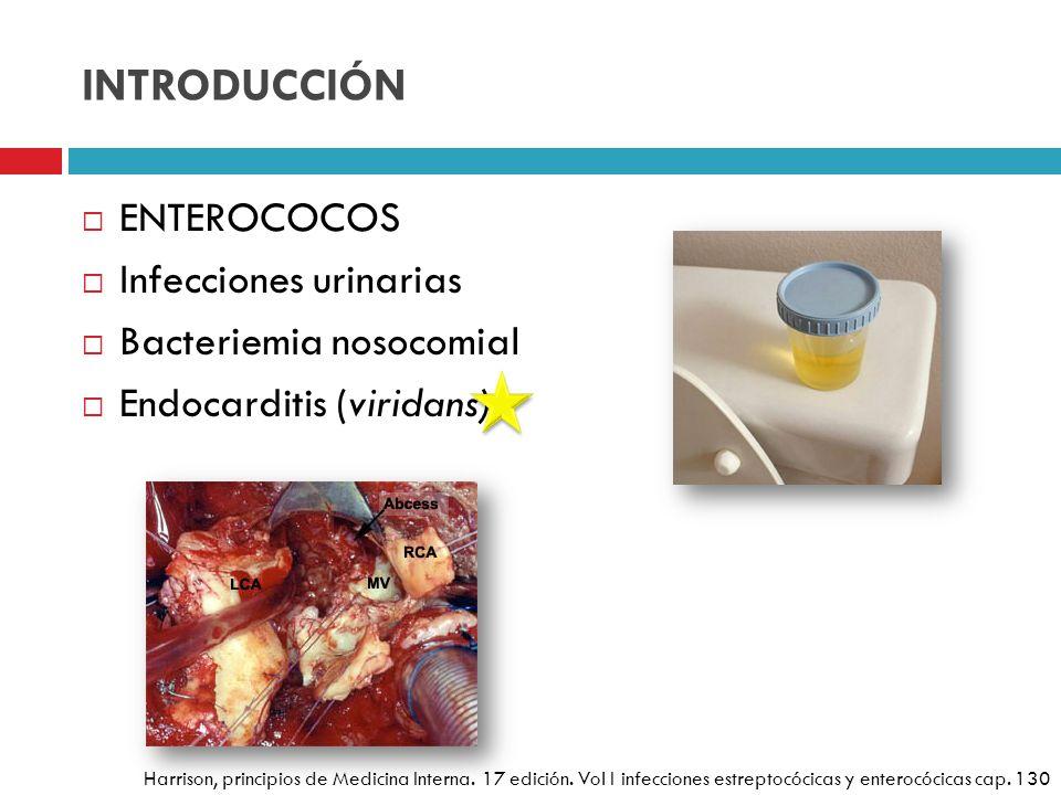 INTRODUCCIÓN ENTEROCOCOS Infecciones urinarias Bacteriemia nosocomial