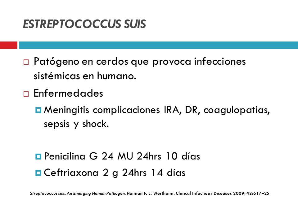 ESTREPTOCOCCUS SUIS Patógeno en cerdos que provoca infecciones sistémicas en humano. Enfermedades.