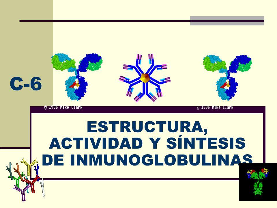 ESTRUCTURA, ACTIVIDAD Y SÍNTESIS DE INMUNOGLOBULINAS