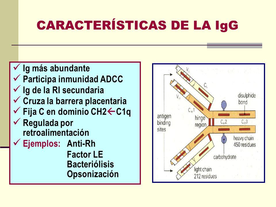 CARACTERÍSTICAS DE LA IgG