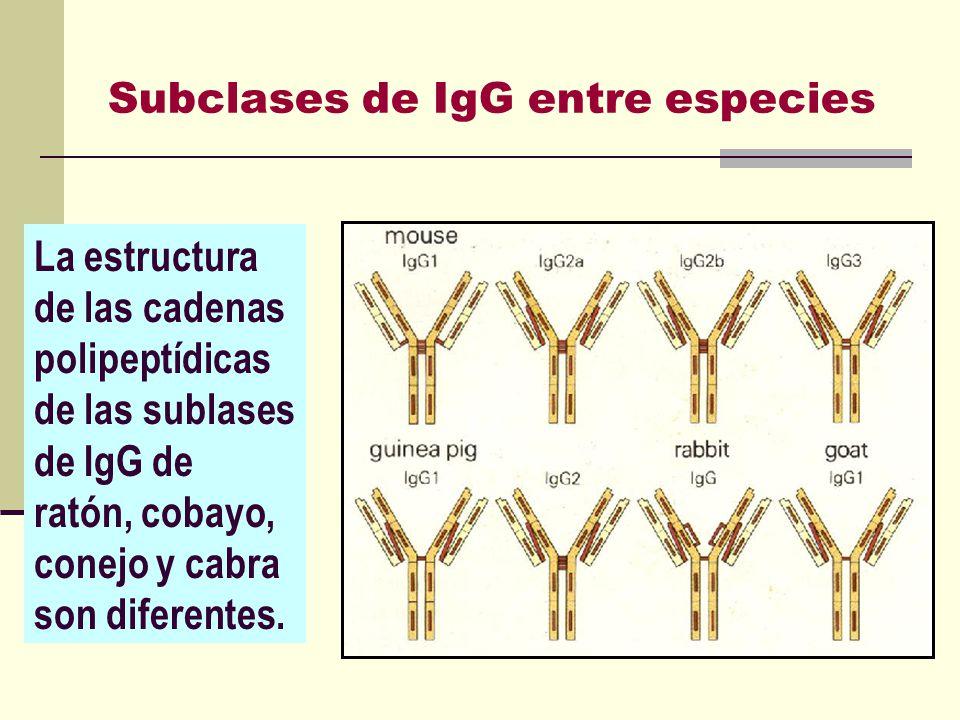 Subclases de IgG entre especies