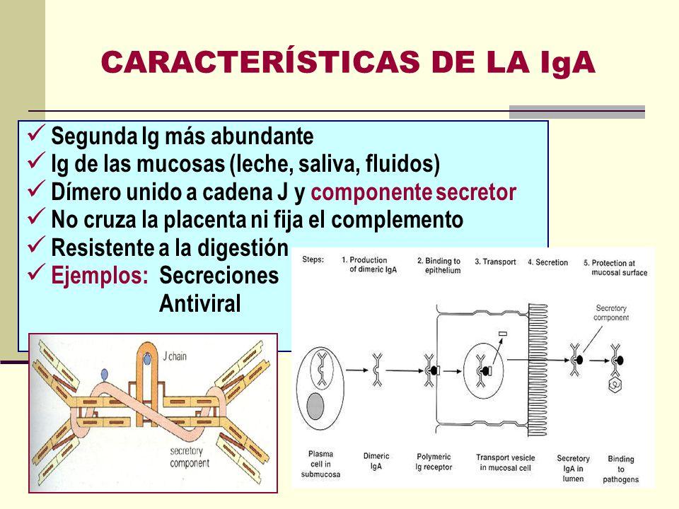 CARACTERÍSTICAS DE LA IgA