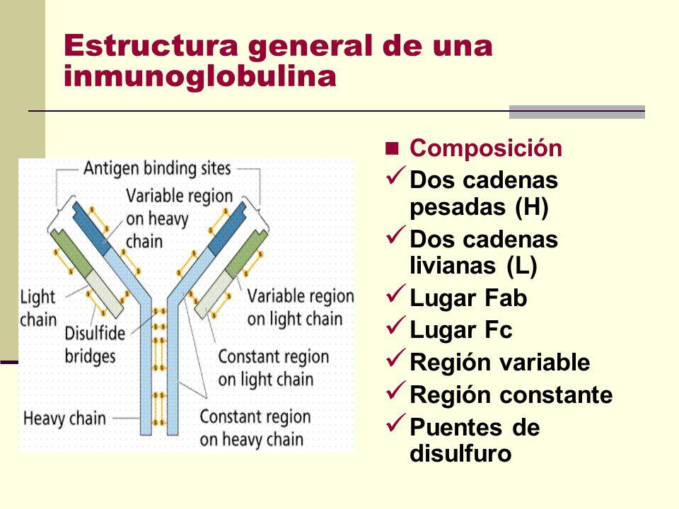 Estructura general de una inmunoglobulina