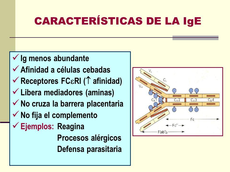 CARACTERÍSTICAS DE LA IgE