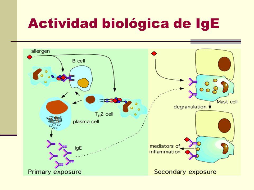 Actividad biológica de IgE