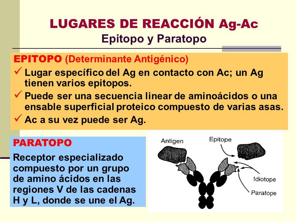 LUGARES DE REACCIÓN Ag-Ac Epitopo y Paratopo