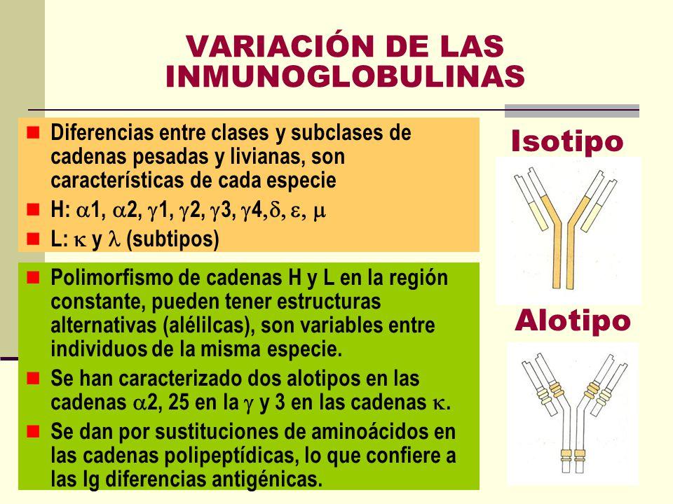 VARIACIÓN DE LAS INMUNOGLOBULINAS