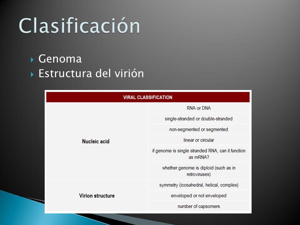 Clasificación Genoma Estructura del virión
