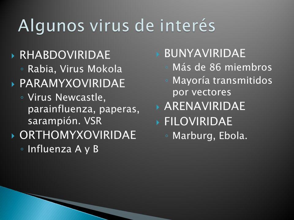 Algunos virus de interés