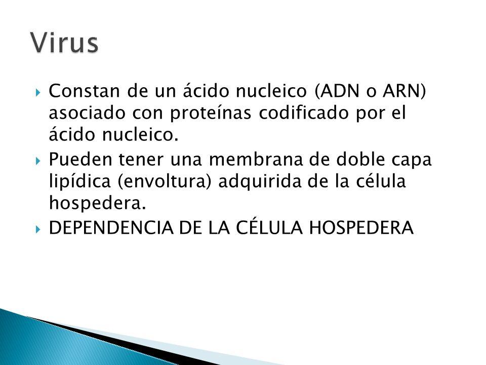 Virus Constan de un ácido nucleico (ADN o ARN) asociado con proteínas codificado por el ácido nucleico.