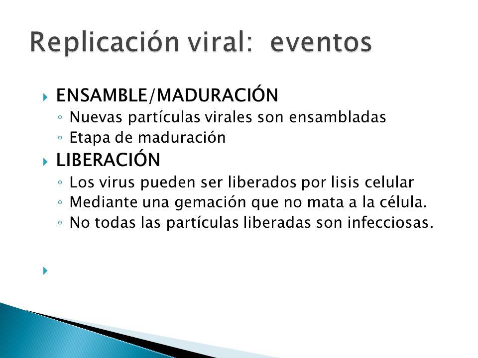 Replicación viral: eventos