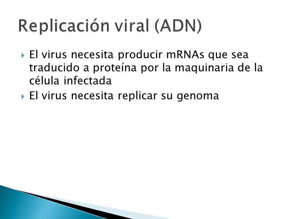Replicación viral (ADN)