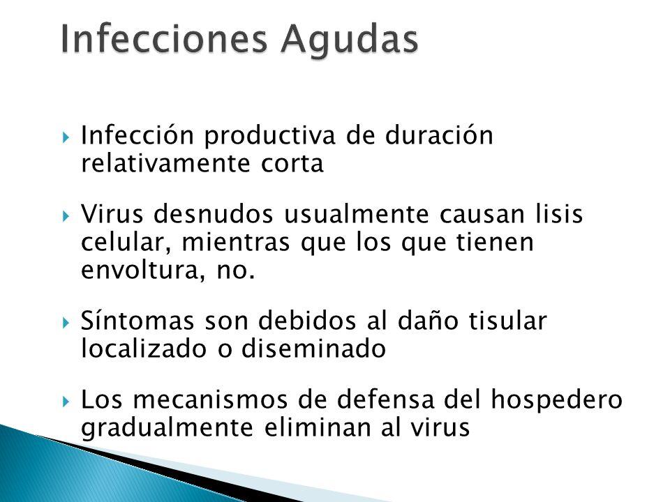 Infecciones Agudas Infección productiva de duración relativamente corta.
