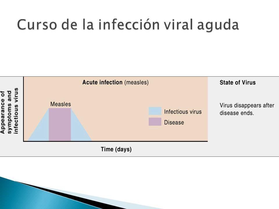 Curso de la infección viral aguda