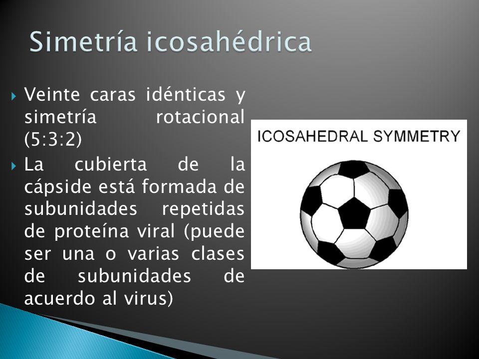 Simetría icosahédrica
