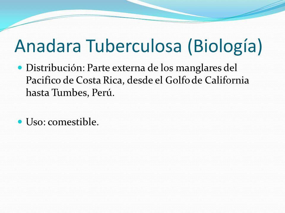 Anadara Tuberculosa (Biología)