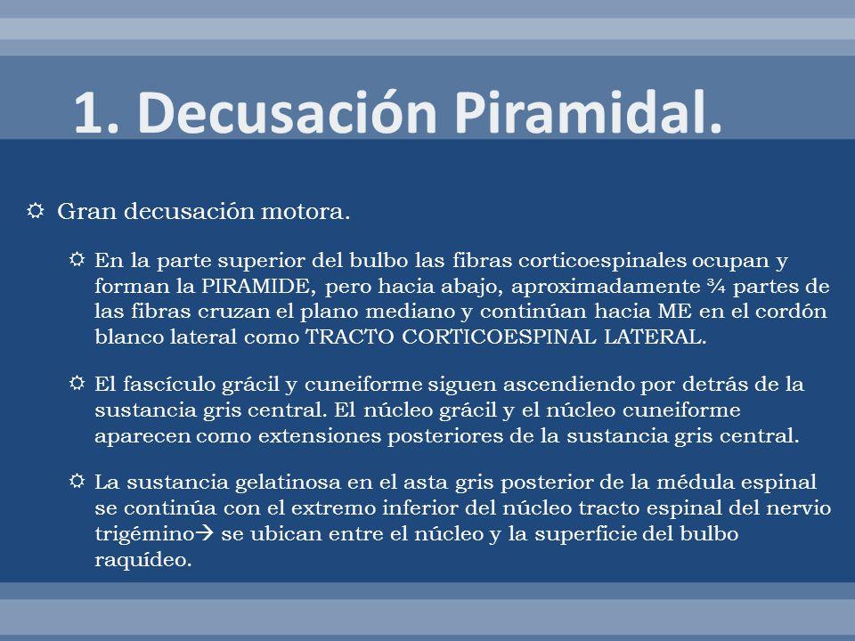 1. Decusación Piramidal. Gran decusación motora.