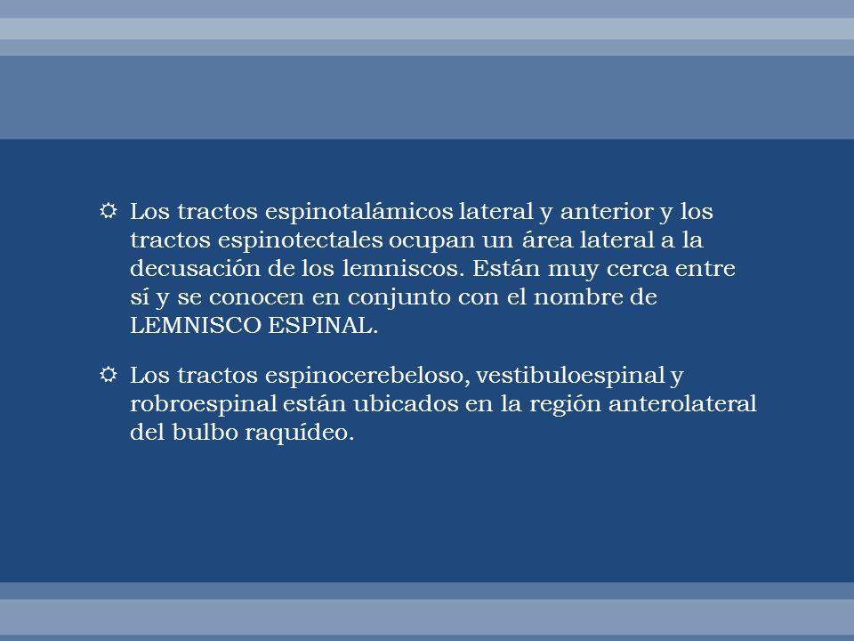Los tractos espinotalámicos lateral y anterior y los tractos espinotectales ocupan un área lateral a la decusación de los lemniscos. Están muy cerca entre sí y se conocen en conjunto con el nombre de LEMNISCO ESPINAL.