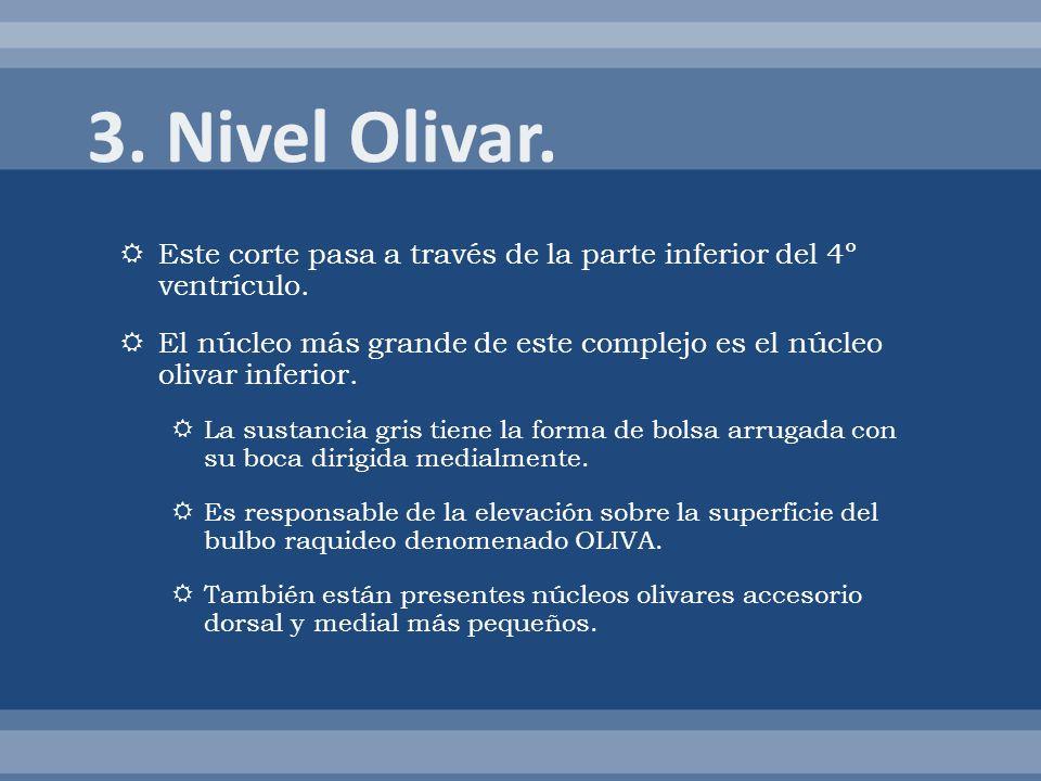 3. Nivel Olivar. Este corte pasa a través de la parte inferior del 4º ventrículo.