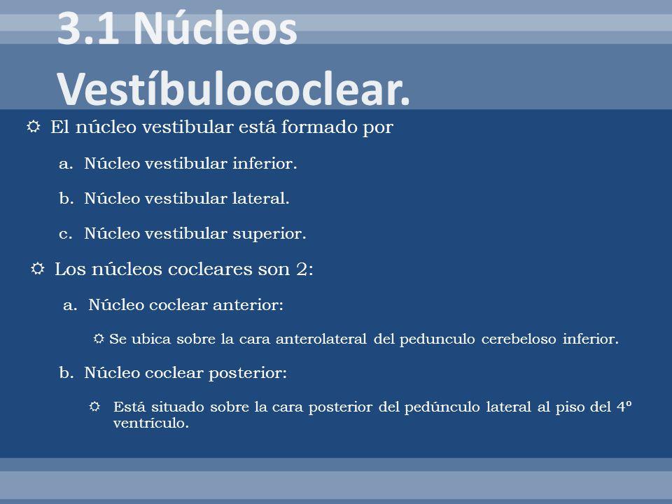 3.1 Núcleos Vestíbulococlear.