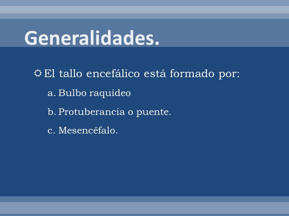 Generalidades. El tallo encefálico está formado por: Bulbo raquídeo