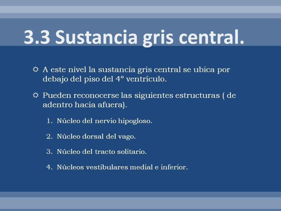 3.3 Sustancia gris central.