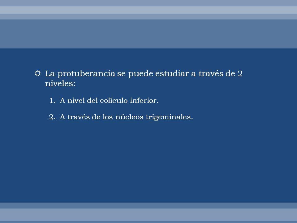 La protuberancia se puede estudiar a través de 2 niveles: