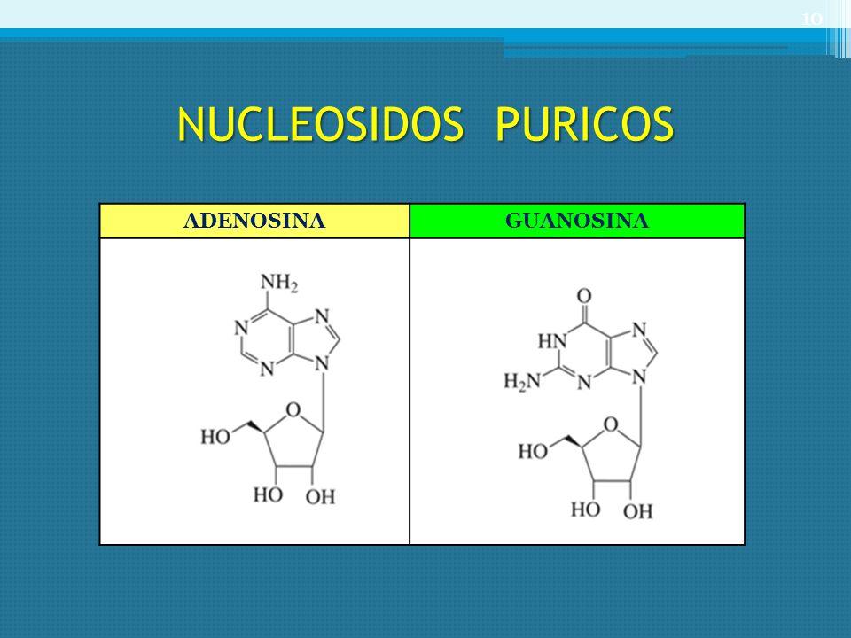 NUCLEOSIDOS PURICOS ADENOSINA GUANOSINA