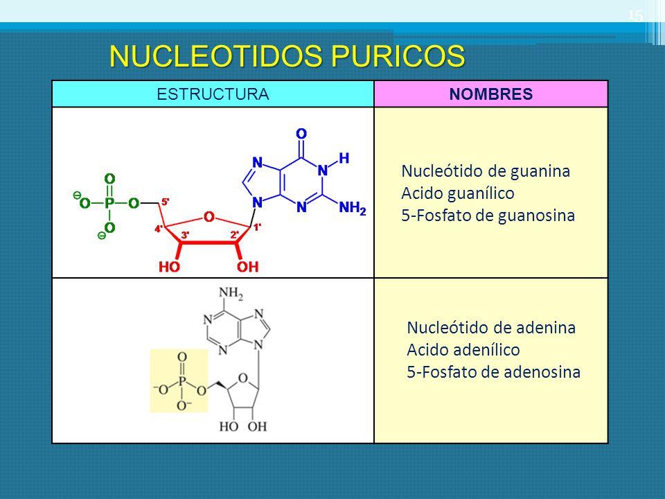 NUCLEOTIDOS PURICOS Nucleótido de guanina Acido guanílico
