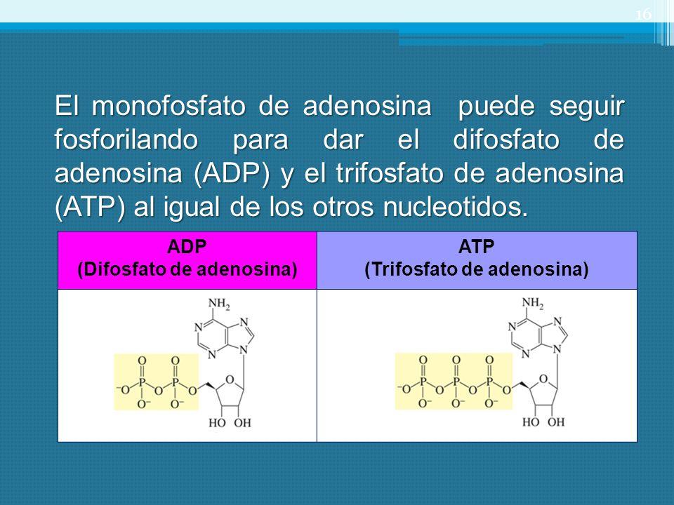 (Difosfato de adenosina) (Trifosfato de adenosina)