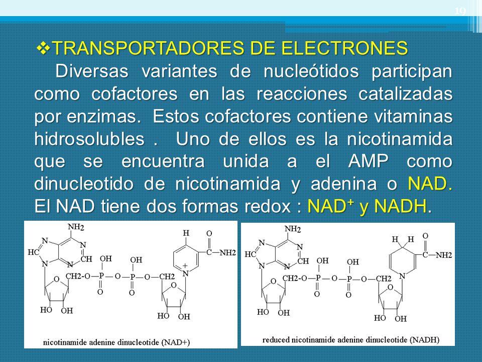 TRANSPORTADORES DE ELECTRONES