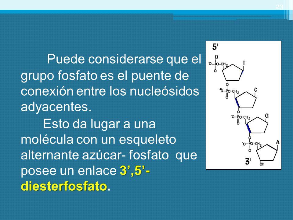 Puede considerarse que el grupo fosfato es el puente de conexión entre los nucleósidos adyacentes.