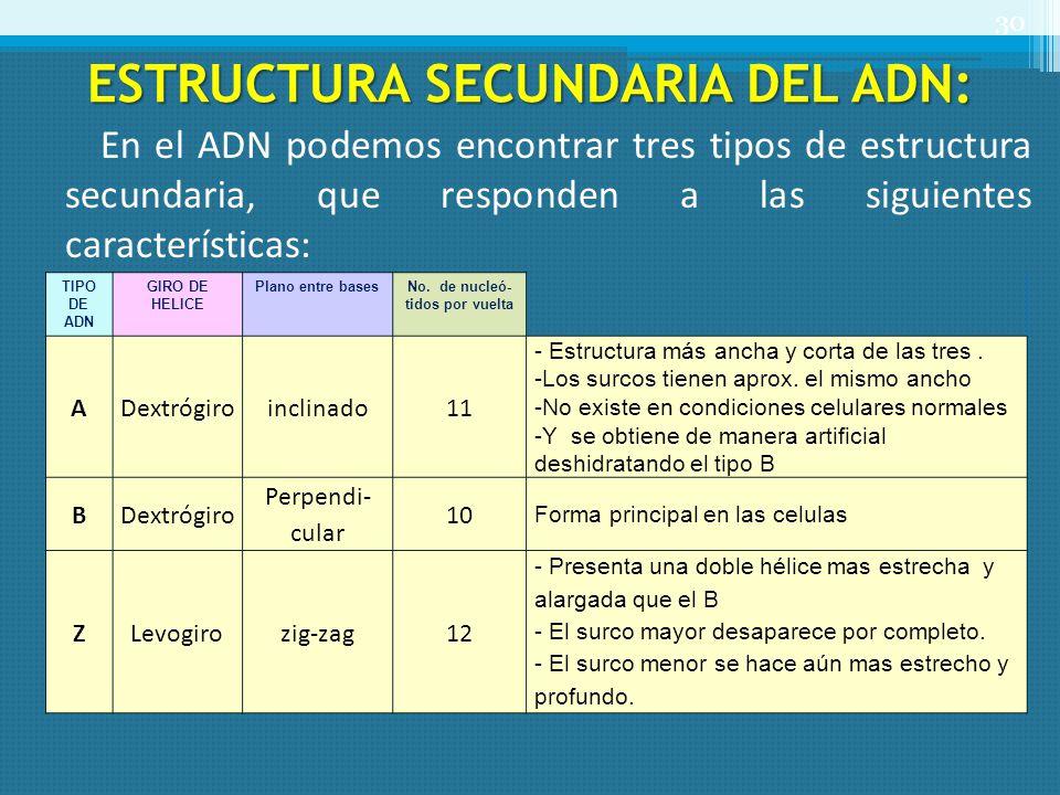 ESTRUCTURA SECUNDARIA DEL ADN: