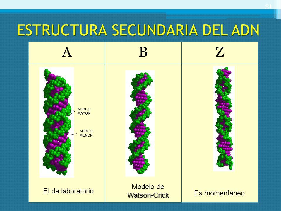 ESTRUCTURA SECUNDARIA DEL ADN