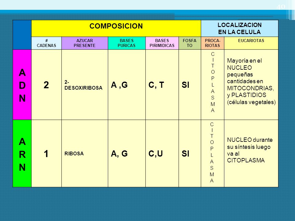 2 ADN 1 ARN A ,G C, T SI A, G C,U COMPOSICION LOCALIZACION
