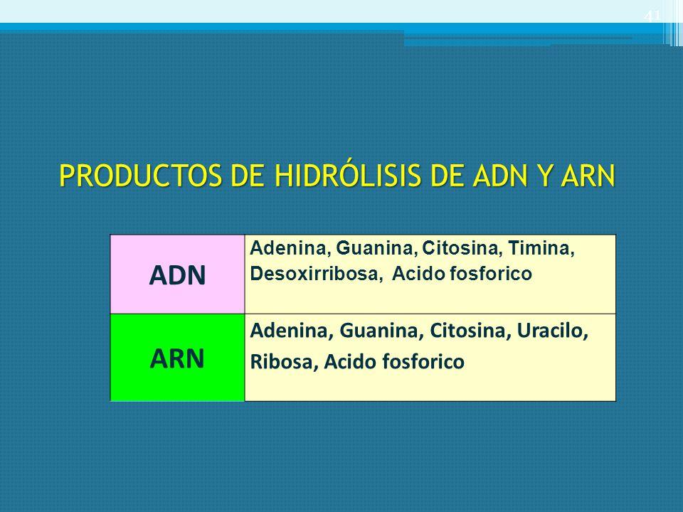 PRODUCTOS DE HIDRÓLISIS DE ADN Y ARN