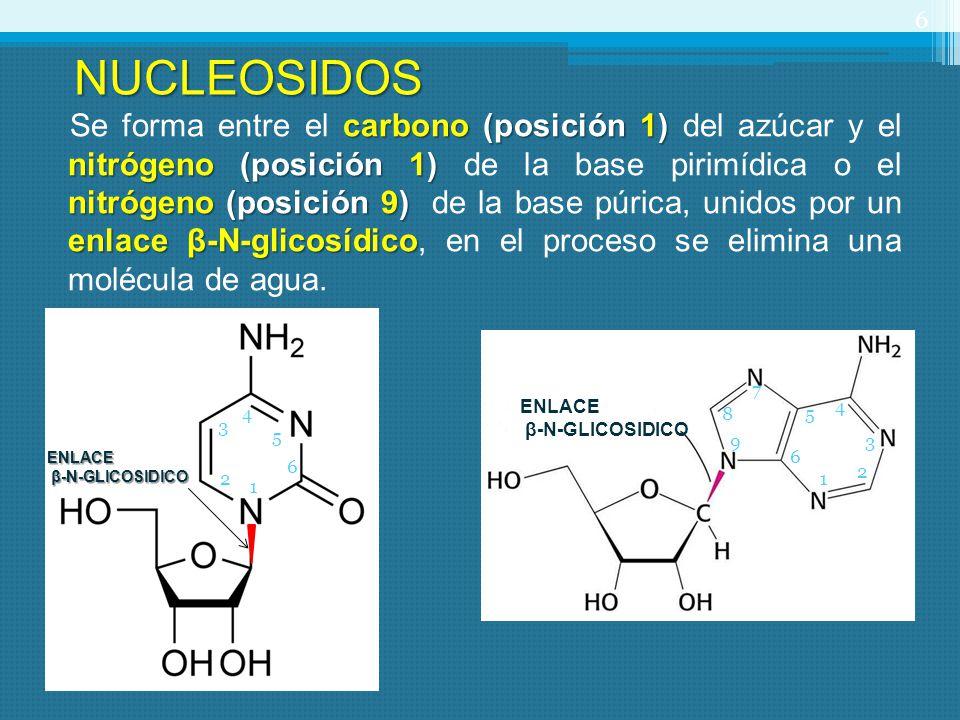 NUCLEOSIDOS
