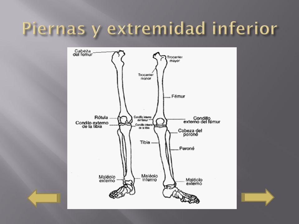 Piernas y extremidad inferior