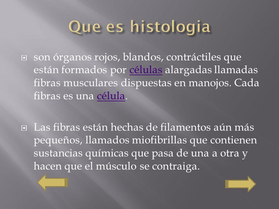 Que es histologia