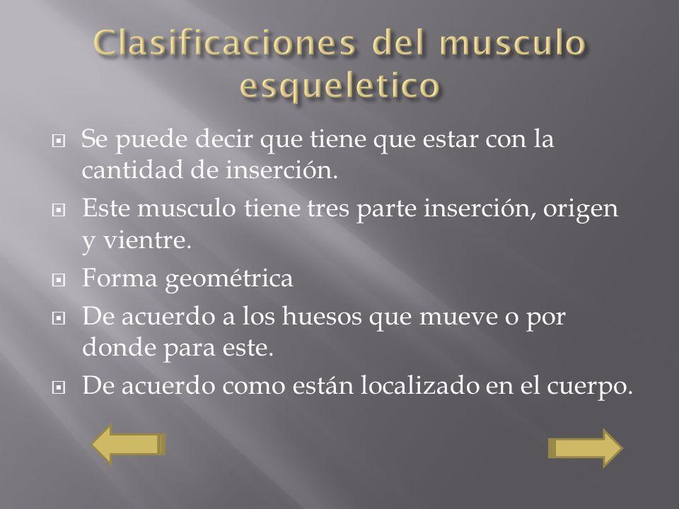 Clasificaciones del musculo esqueletico