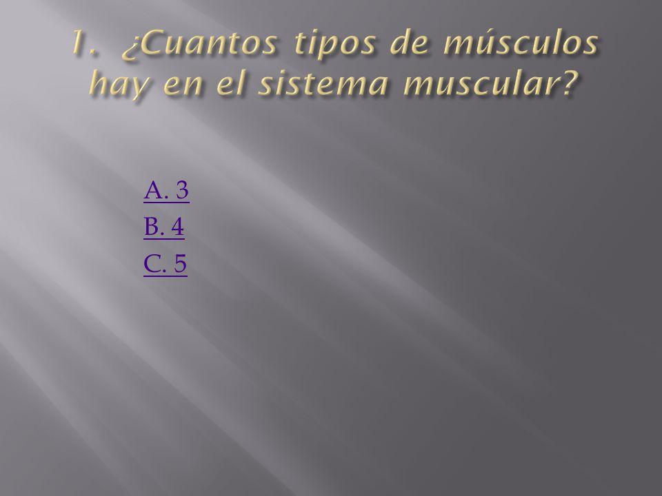 1. ¿Cuantos tipos de músculos hay en el sistema muscular