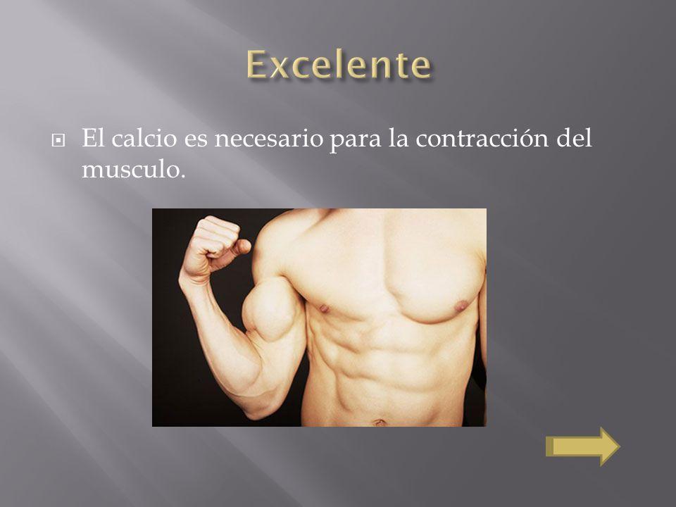 Excelente El calcio es necesario para la contracción del musculo.