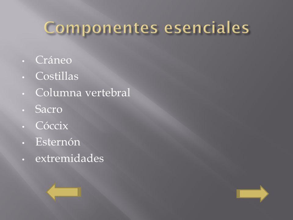 Componentes esenciales