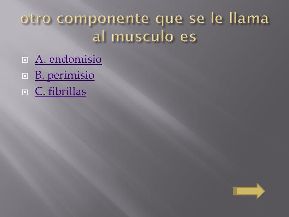 otro componente que se le llama al musculo es